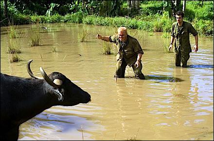 black-y-vaca.jpg