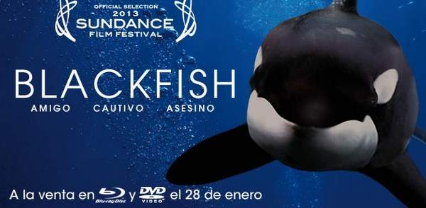 Blackfish regalamos 3 DVD