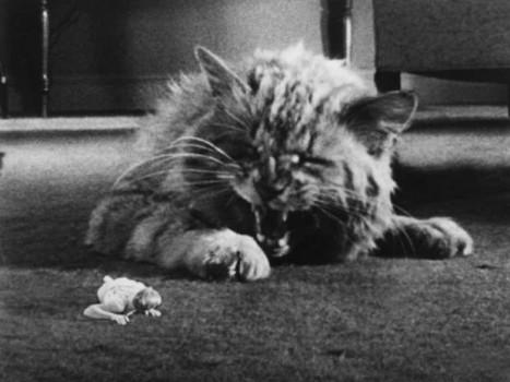 Especial gatitos en el cine